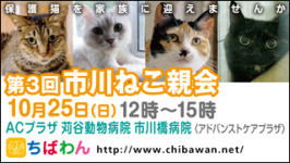 Ichikawaneko03_320x180266x150_2